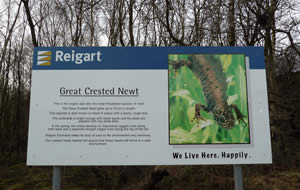 Crested Newt information sign