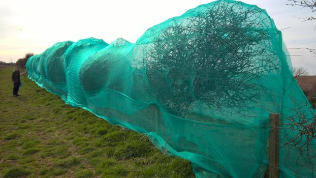 Netted hedgerows